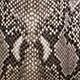 Rosa palo oscuro